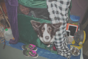 Woman and Border Collie dog peering out of dog crate