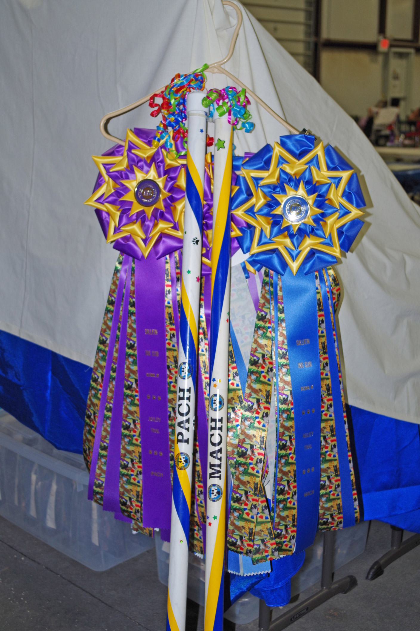 Gallatin Dog Training Club's MACH and PACH ribbons and bars